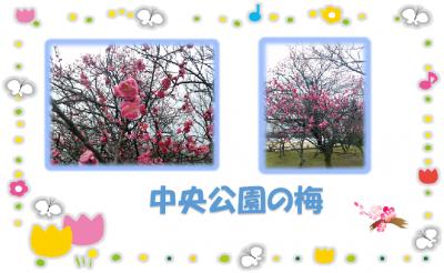 梅 中央公園